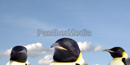 penguin portrait