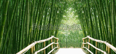 bambus-allee - 1833243