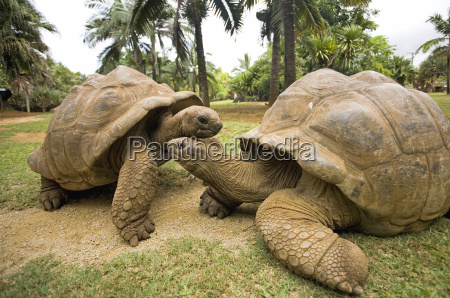 galapagos, schildkröten - 3104911