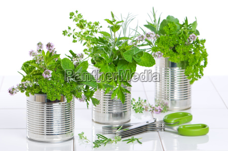 frische kraeuter in recycled cans