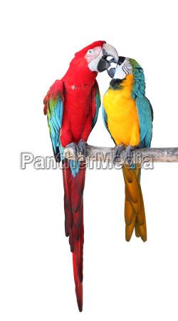 papageien freigestellt