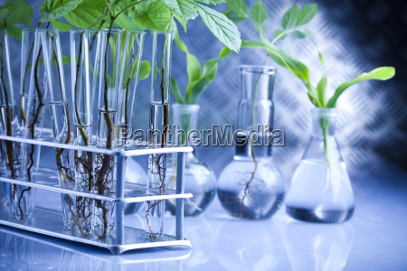 plants and laboratory