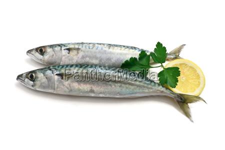zwei makrele mit zitrone
