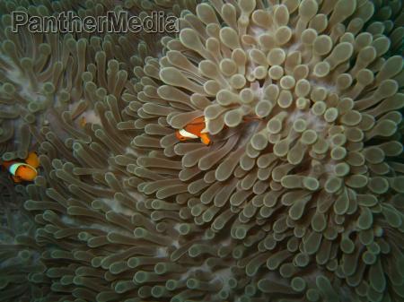 close up anemone