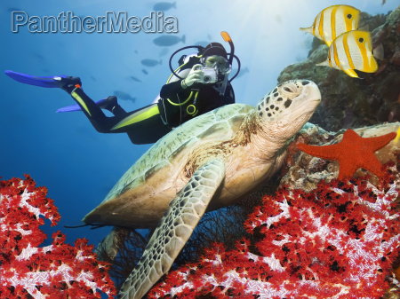 green turtle underwater