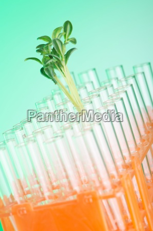 lab tests with green seedlings