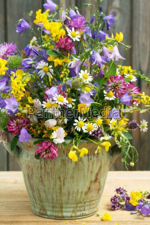 wildblumen und kraeuter