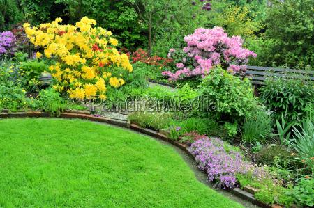 azalee und rhododendron im garten