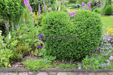 buchsbaum in herzform im garten