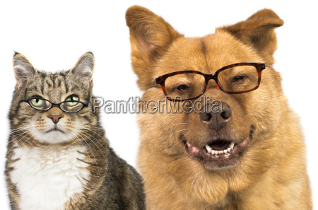 hund, und, katze, trägt, eine, brille - 11468439