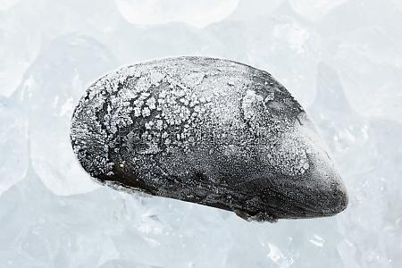 food aliment mollusc frozen raw shellfish