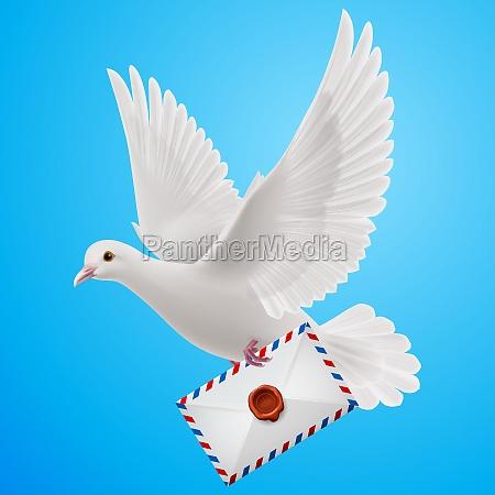 dove white