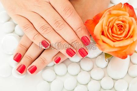 female hand near the flower