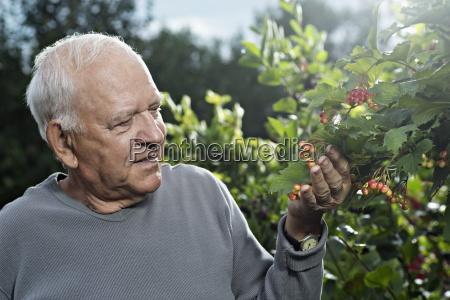 blatt baumblatt farbe entspannung maennlich mannhaft