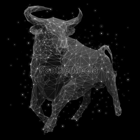 still life colour night nighttime bull