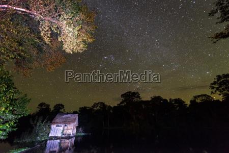 amazonian stars