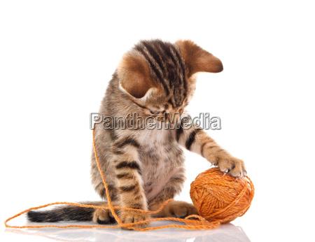 playful kitten with brown ball