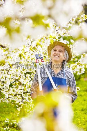 gaertner kirschbaum astschere kirschbluete