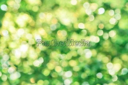 beautiful defocused highlights in foliage