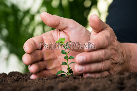 businessmans hands protecting plant on land