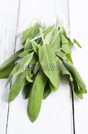 fresh sage leaves on white wood