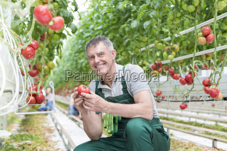 smiling man in greenhouse holding tomato