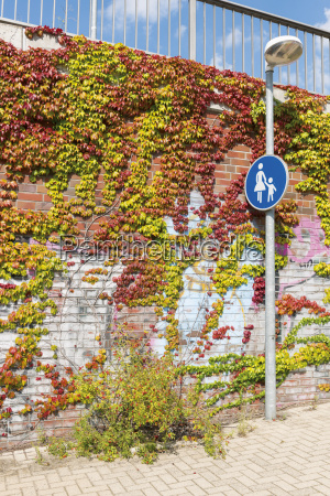 overgrown brick wall at pedestrian walkway