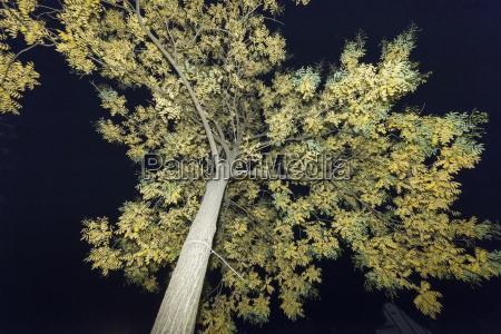 tree at night flashed