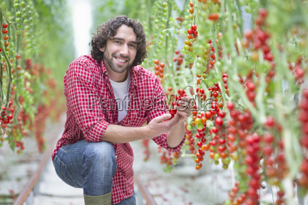 portrait smiling worker inspecting vine tomato
