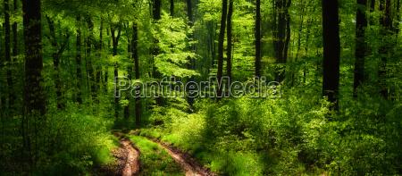 wald panorama mit einer besonderen lichtstimmung
