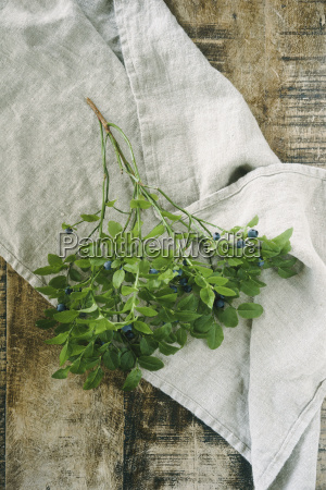 twig with blueberries on cloth and