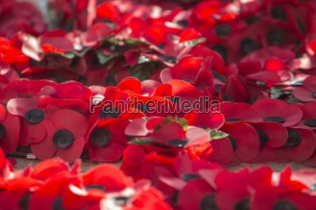 poppies at war memorial london england