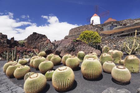cactus garden jardin de cactus by