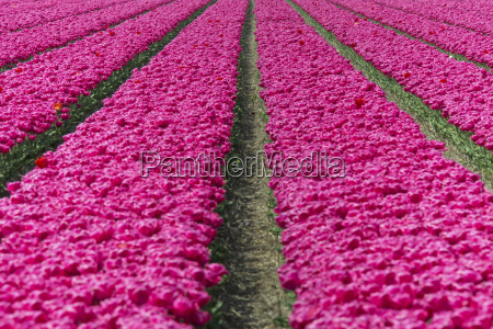 the colourful scenery of spring fields
