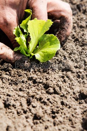 einschlag blatt baumblatt boden erdboden erde