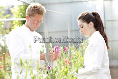 wissenschaftler untersuchen pflanzen zusammen