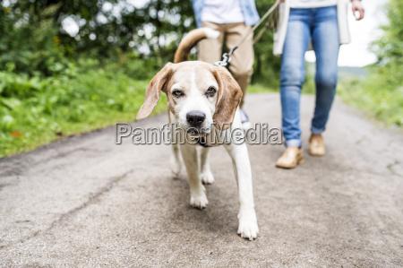 portrait of dog on a walk