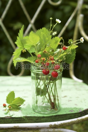 sprigs of wild strawberries in a