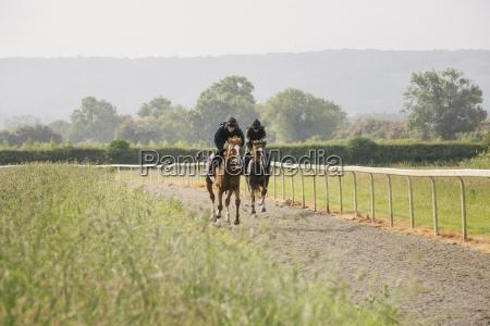zwei pferde und reiter auf einem