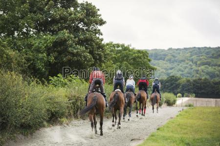 sport anhoehe huegel pferd ross tier