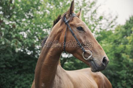 sport baum pferd ross tier saeugetier