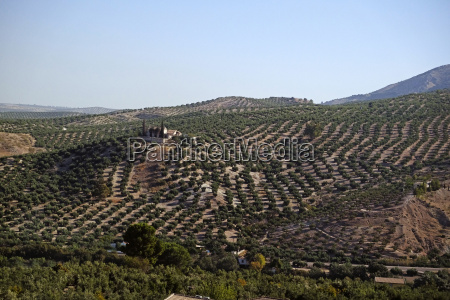 scenic view of farmland with orchards