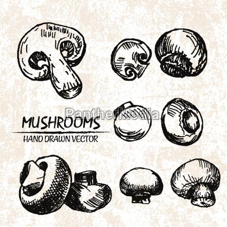 digital vector detailed mushrooms hand drawn