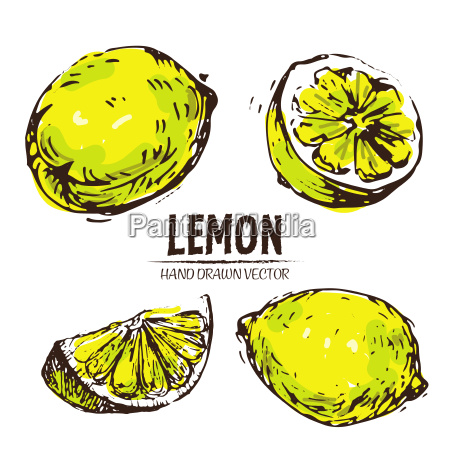 digital vector detailed color lemon hand
