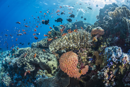 profusion of hard and soft corals