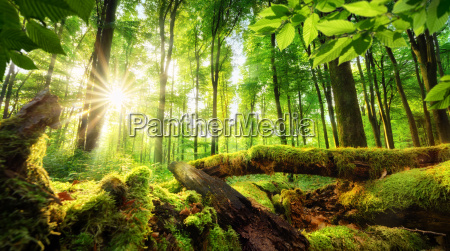 forest scenery with beautiful sun rays