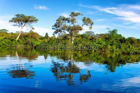 amazon rainforest reflection