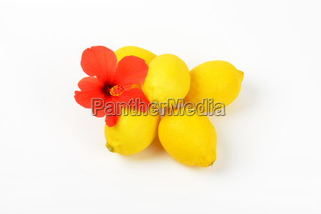 ripe lemons with red hibiscus bloom