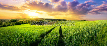 vast green field at gorgeous sunset