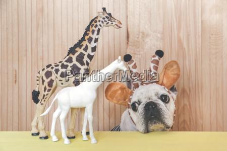 french bulldog wearing giraffe headband with